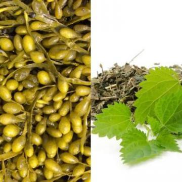 Diminue l'absorption des graisses. Maigrir sérieusement, raisonnablement, complément en iode - Fucor - Labosp.com